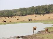 努力不让西原地区人民因旱情受饥饿和缺乏生活用水