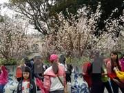 2016年日本樱花节于本月中旬在升龙皇城举办