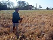 越南政府向干旱和海水入侵灾区提供援助资金