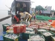 越南加快中部大批鱼死亡事件的原因调查工作
