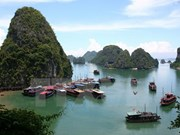 越南旅游市场活跃发展