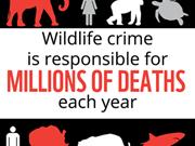 越美合作打击野生动植物非法交易
