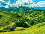 越南被列为全球最受欢迎的独自旅行胜地