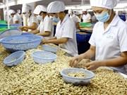 今年越南需要进口45万吨粗腰果