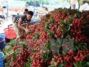2016年越南荔枝出口促进会在谅山省举行