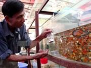 胡志明市观赏鱼出口额达约700万美元