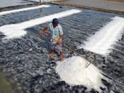 越南政府副总理王廷惠指导2016年海盐购储工作