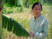 越南多部电影将亮相菲律宾国际电影节