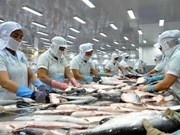 2016年上半年越南查鱼出口总额达6.16亿美元