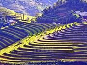 越南西北地区各省在河内推介当地文化之美