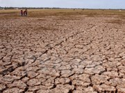 美国向越南提供50万美元紧急援助 用于克服旱灾和海水入侵后果