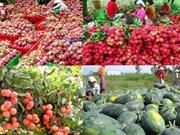越南经谅山省口岸对中国出口农产品逾40万吨