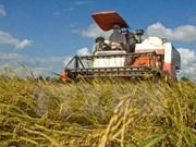 越南金瓯省进行优质水稻产区规划