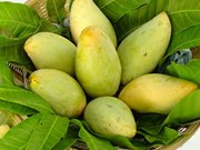 美国拟允许进口越南芒果和牛奶果