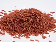 广治省拟兴建大米制品粗加工和加工厂
