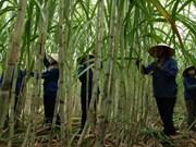 气候变化给越南蔗糖业带来挑战