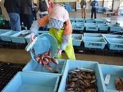 日本宫城县帮助各水产企业向越南出口海产品