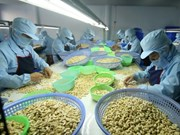 今年前8月越南腰果出口额同比增长12.7%