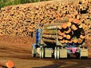 缅甸政府允许恢复2017-2018财年木材生产