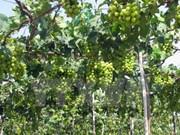2016年宁顺葡萄与葡萄酒节将于本月底举行