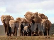 """""""捏塑大象-拯救大象""""——提高野生动物保护意识的实习班"""
