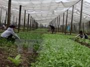 西宁省选择日本为高科技农业领域合作伙伴