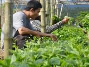 胡志明市促进对高科技农业园区的投资