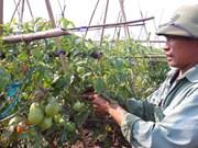 越日加强农业合作