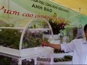 胡志明市协助企业投资高科技种植蔬菜