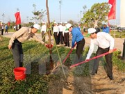 胡志明市力争至2020年底森林覆盖率达40%