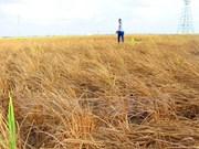 世行协助越南九龙江三角洲提高适应气候变化能力