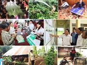 贷款优惠政策促使越南西原地区贫困率降低