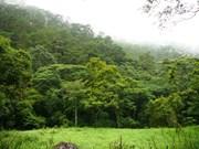 西原地区各省力争到2020年新造林面积达7.1万公顷