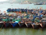 越南拟将岘港市建设成为一个重点大型渔业中心