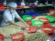 越南腰果加工企业面临原料短缺局面