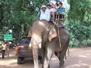 保护大象宣传周在广南省举行