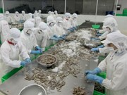 今年越南虾类出口额预计突破30亿美元