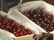 越南自澳大利亚的蔬果进口额突增
