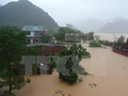 越南中部各省抓紧抓实暴雨洪灾后恢复重建工作