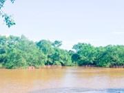 越南海洋海岛:保护广治省海边堤坝系统