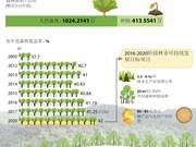 图表新闻:越南努力使森林覆盖率达到42%