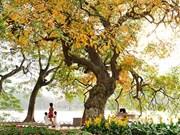 越南河内市秋色之美