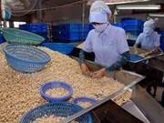 2015年越南腰果出口预计达25亿美元