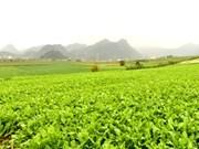 木州高原进入魅力无穷的白色芥菜花季节