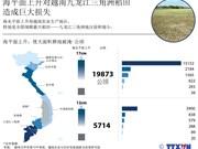 海平面上升对越南九龙江三角洲稻田造成巨大损失