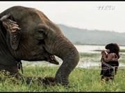 《捏塑大象—拯救大象》——提高野生动物保护意识的实习班