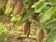 越南可可跻身于好味道的排行榜