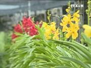 高科技农业——胡志明市新发展方向
