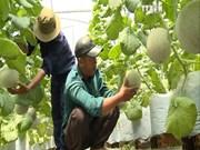 高科技农业-胡志明市新发展方向