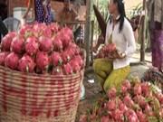 2016年前11月越南水果蔬菜出口额达近22亿美元